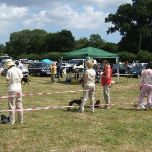 Rendham fate dog show